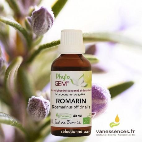 Bourgeon de Romarin bio - Macérat glycériné Rosmarinus officinalis