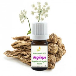Huile essentielle Angélique archangélique - Angelica archangelica - HECT origine France