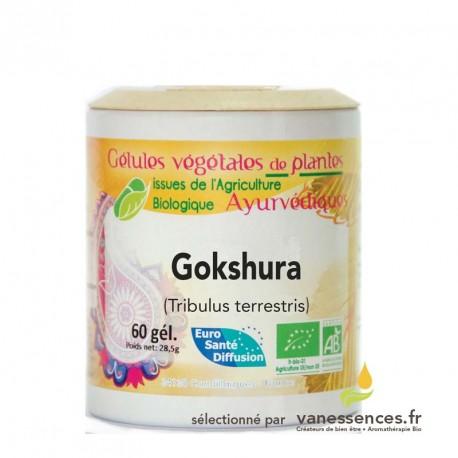 Gokshura bio. Gélules de poudre de fruit de Tribule plante ayurvédique