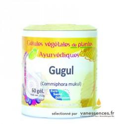 Gomme de Guggul. Gélules de poudre de Myrrhe Commiphora mukul ou Gugul