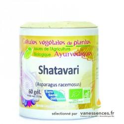 Shatavari bio Gélules de poudre d'Asparagus racemosus Asperge sauvage