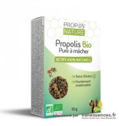 Gomme de Propolis à macher bio. Barres de propolis bio pure.