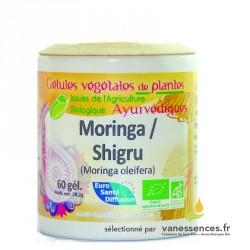 Gélules de poudre de Moringa bio ou Shigru - Moringa oleifera