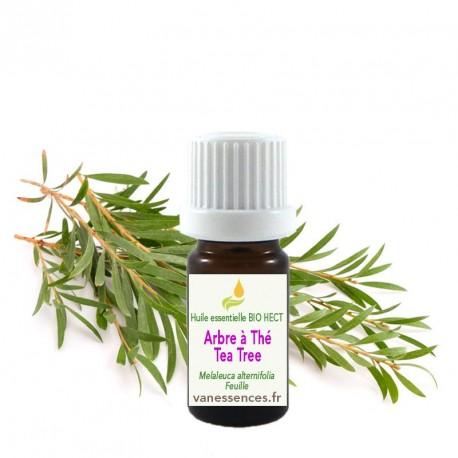 Huile essentielle BIO HECT Arbre à thé ou Tea tree (Melaleuca Alternifolia)