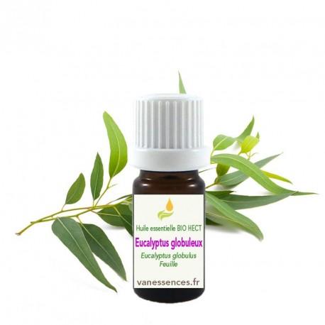 Eucalyptus globuleux - Eucalyptus globulus - Huile essentielle BIO HECT