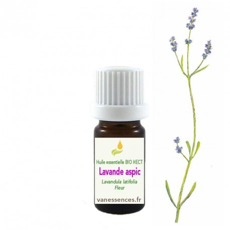 Lavande aspic Lavandula latifolia  - Huile essentielle BIO HECT