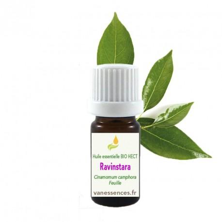 Huile essentielle de Ravintsara BIO HECT - Cinnamomum camphora