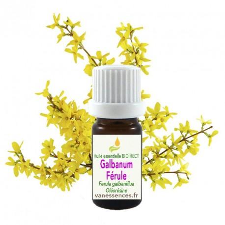 Huile essentielle Bio de Férule gommeuse ou Galbanum, Ferula galbaniflua ou Ferula gomusa ou gommosa