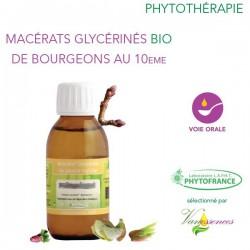Cornouiller sanguin Macérat glycériné dilué au 10eme